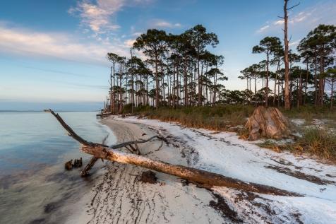 Die Bäume von St. Georg Island Florida