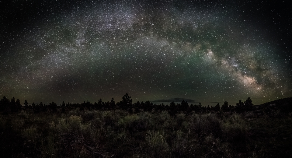 Milkyway Dixie Forest