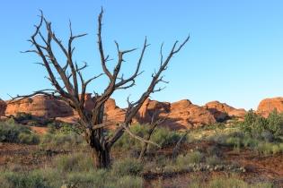 Viele dieser abgestorbenen Bäume stehen als auf den trockenen Flächen im Park.