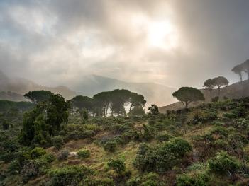 Nebel und Sonne