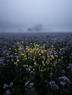 Herbstliches Blumenfeld im Mitteland